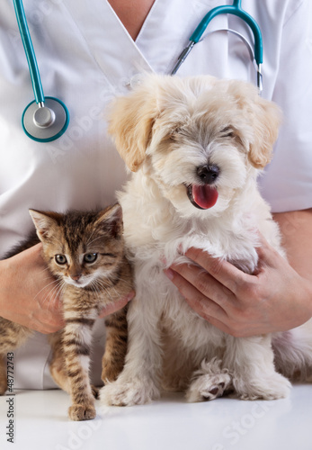 Keuken foto achterwand Kat Little dog and cat at the veterinary