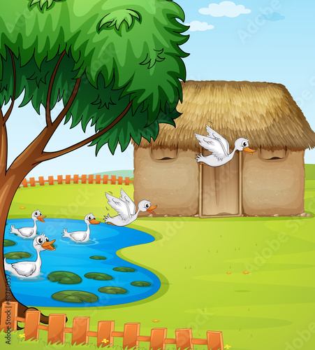 Fotobehang Rivier, meer Ducks, a house and a beautiful landscape