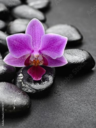 piekna-fioletowa-orchidea