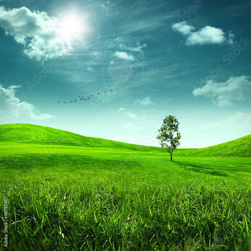 Foto  Beauty meadow. Abstract summer landscape for your design