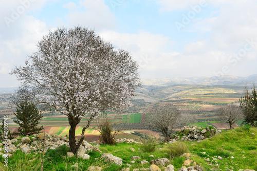 Photo  Wild almond tree in beautiful scenery
