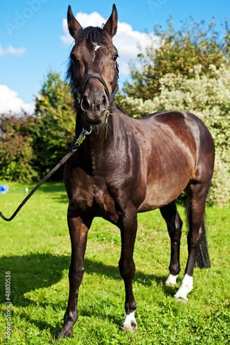 Fotografía  Pferd