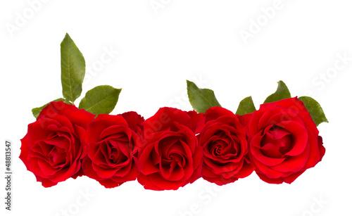 Staande foto Roses border of red roses