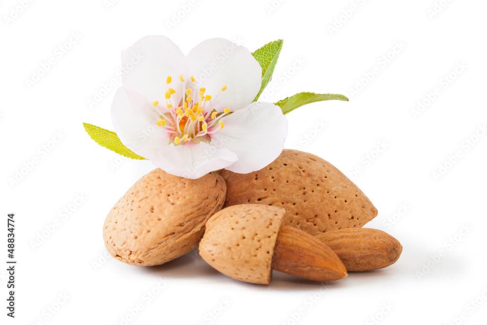 Fototapety, obrazy: Almond with flower