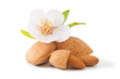 canvas print picture - Almond with flower