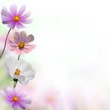 Fototapeta Kwiaty - kwiat