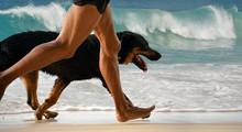 Running Man, Dog On Morning Be...