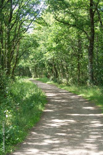 Foto op Plexiglas Groene Forêt - chemin de terre