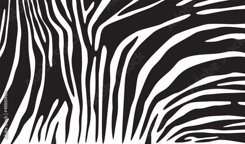 Fototapeta na wymiar zebra skin background