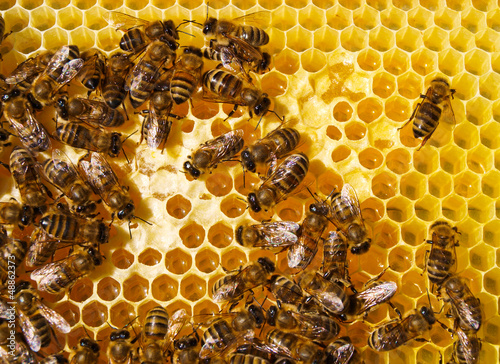 Fotografie, Obraz  Work of the bees in hive
