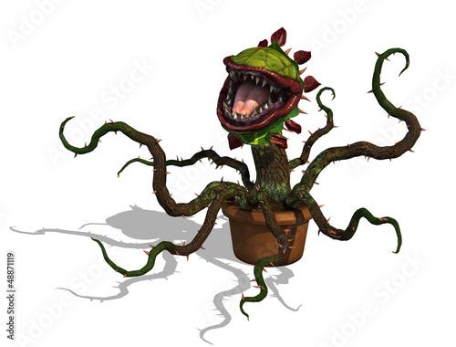 Fotografia Hungry Carnivorous Plant