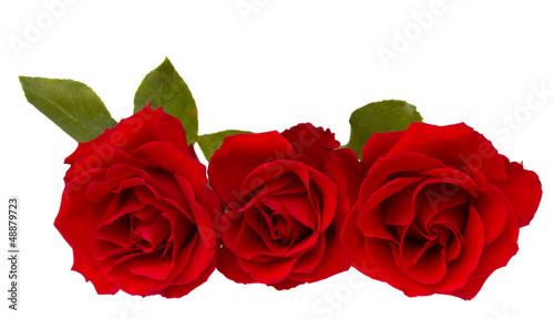 Staande foto Roses three red roses