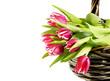 canvas print picture - Tulpen im Korb - Frühlingsgruß