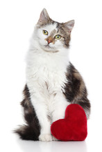Domestic Cat With Red Valentine Heart