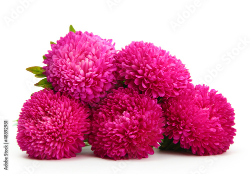 Poster de jardin Dahlia pink aster flowers, isolated on white