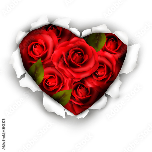 Fototapety, obrazy: Valentine Heart Card Design. Red roses and ripped paper heart. V