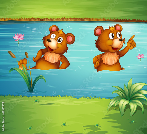 Ingelijste posters Beren Two animals in the pond