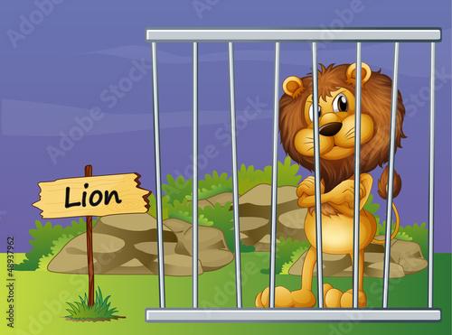 Poster de jardin Zoo A scary lion