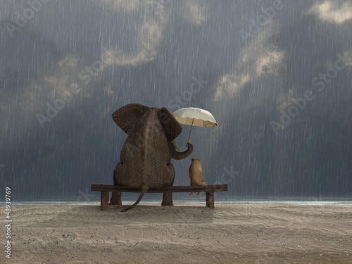 Canvas Print elephant and dog sit under the rain