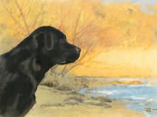 Oil Painting Portrait Of Black...