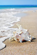 white seashell on beach sand in water
