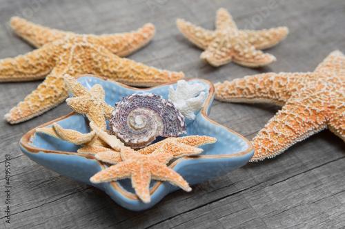 Akustikstoff - Strandgut - maritime Dekoration mit Muscheln und Seesternen