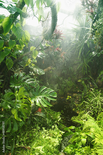 Tropical rainforest #48958797