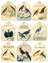 9 Vintage Birds Labels