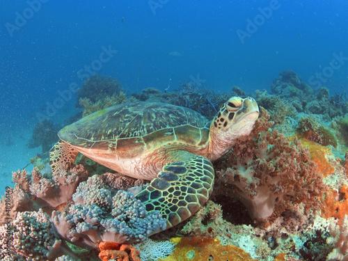 In de dag Zanzibar Green turtle in Zanzibar