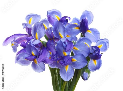 Deurstickers Iris Iris flowers isolated on white