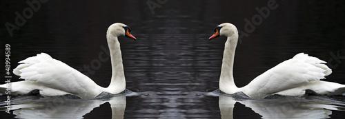 Fotografie, Obraz  coppia di cigni riflessi nel lago