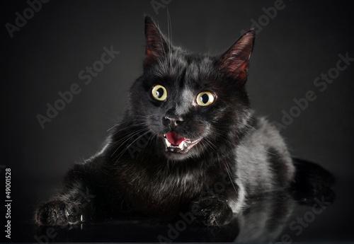 Keuken foto achterwand Kat Black cat on black background