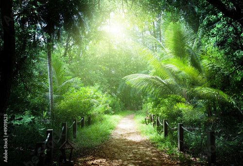 Poster Olive way in jungle of Seychelles islands
