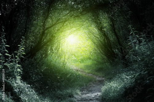 Foto auf Acrylglas Bestsellers way in deep forest