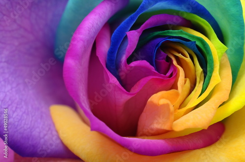 Staande foto Macro Close up of rainbow rose heart