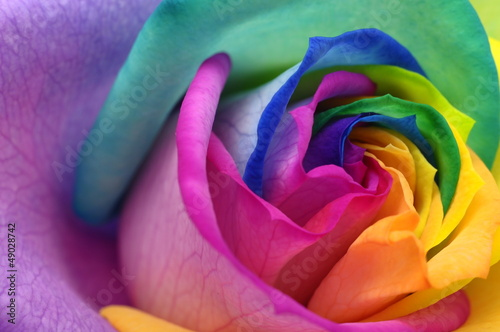 Spoed Fotobehang Macro Close up of rainbow rose heart