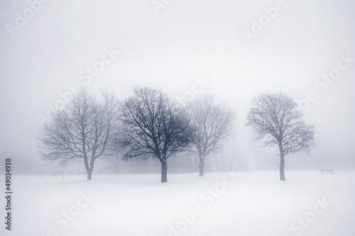 samotne-drzewa-we-mgle