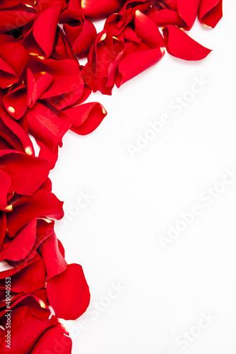 Fototapeta Rose petals obraz