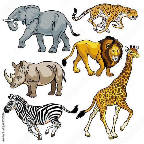 zestaw-zwierzat-afrykanskiej-sawanny-na-bialym-tle