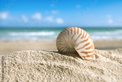 Foto-Leinwand - nautilus shell  with ocean , beach and seascape, shallow dof (von Elena Moiseeva)