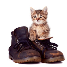 Kitten And Boots