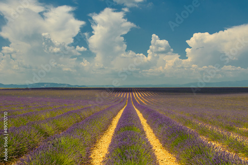 Photo  Lavender field, Provence, France