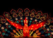 Peacock Lantern At Lantern Fes...
