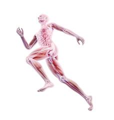 Panel Szklany Podświetlane Do dentysty Sport anatomy - runner
