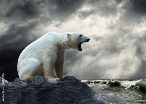 Foto op Canvas Ijsbeer White Polar Bear Hunter on the Ice in water drops.