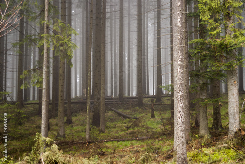 Aluminium Prints Forest in fog cichy las