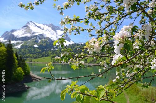 Zdjęcie XXL Wiosna w Szwajcarii