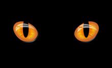 Dangerous Wild Wat Eyes On Black Background