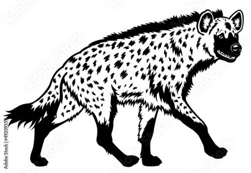 Obraz na plátne spotted hyena black white
