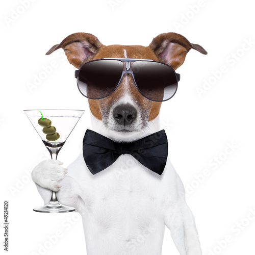 Plagát  martini dog